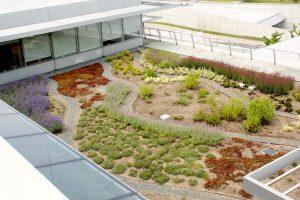 Landscaping at Howard Hughes Medical Institute