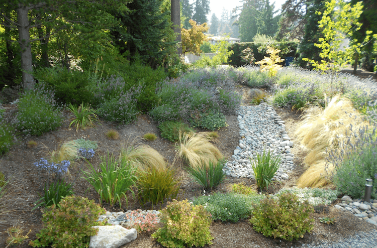 Is A Rain Garden Right For Your Commercial Property?